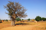 Village south of Malanville, Benin