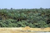 The oasis of Palmyra