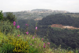 Wildflowers in the Syrian highlands between Salma and Slinfah