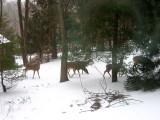 Tree Trimming Squad