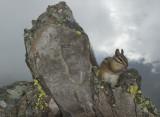 Chimpmunk & Lichen w Storm Clearing
