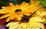 fall flowers pk.jpg