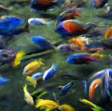 fish liz 10x10