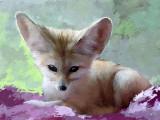 foxy 12x9