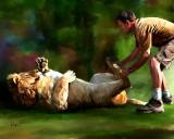 wil lion 10x8.jpg