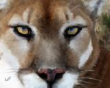 cougar 10x8.jpg