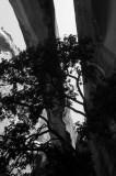 Tree under Morning Glory Natural Bridge