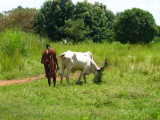 Dinka man and his cow