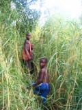 Following the boys through the grass