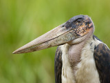 KENYA 2007 BIRDS