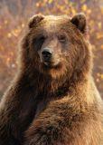 Alaska Wildlife Conservation Center Photos
