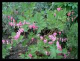 Cheerless flowers