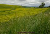 Grasses & Mustard