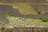 Palouse Canyon Detail