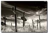 New Mexico - 2007