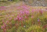 Tasiilaq (Ammassalik/East Greenland) - Part III