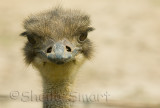 Ostrich at f/10