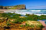 Avalon Beach with sea grass