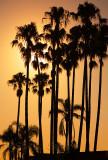 Palms at Narrabeen
