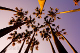 Palms from below