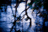 Mangroves in moonlight reflection at Careel Bay, Pittwater