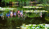 Reflection in Monet's lily pond, Giverny, France