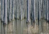 Chickahominy Swamp
