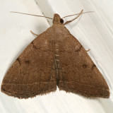 8349 -- Complex Zanclognatha -- Zanclognatha protumnusalis