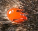 Mite on a moth