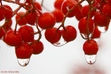 Red Berry Droplets
