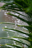 Monkey Puzzle Droplets