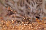 Weeds  Roots 0107.jpg