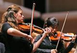Violins 0165.jpg