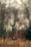 Grass 0778.jpg