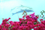 Antigua 12 Mar 2006 011.jpg