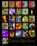 Floral Alphabet Poster (Now Available)