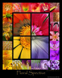 Floral Spective (Macro View)