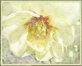 gladys flower - gypsylulu