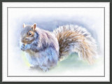 Squirrel  by Joy So CA  - July 2007