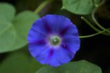 flower 2 ULC.jpg