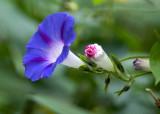 flower ULC.jpg