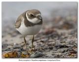 Les oiseaux de Terre-Neuve / Birds of Newfoundland
