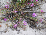 Tiny flowers blooming in sand and mist