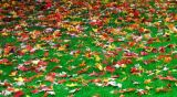 carpet of leaves