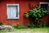 plants on side of red barn