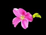 Floristically Fantastic