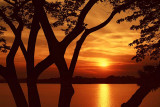 Tree-framed Sunset