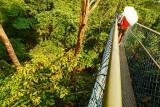 HSBC Tree Top Walk