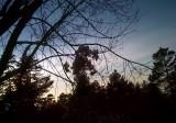 Cellphone 4:  As sun was going down