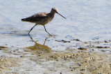 Whimbrel?   Taken from center of a max zoom shot.
